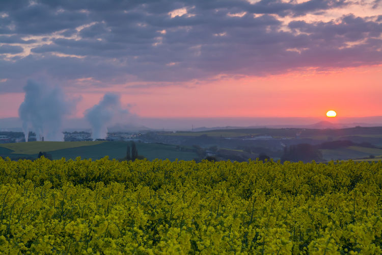 Scenic view of oilseed rape against landscape during sunset