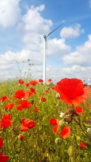 Field Plant Flower Cloud - Sky Close-up Flower Head Red Day Mohnblumenfeld Mohnblumenwiese Windmill Wind Power Wind Turbine