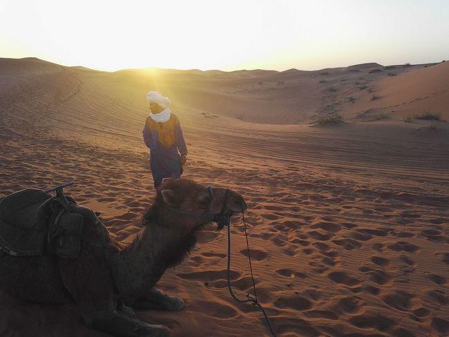 Sunset Nofilter Sand Sahara Sahara Desert Camel Desertlife Desert Outdoors Hijab Merzouga Marrocco
