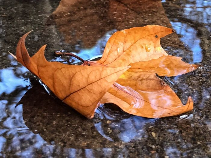 Close-up of dry autumn leaf on water