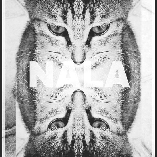 Cat Lastraw Sweet Nala