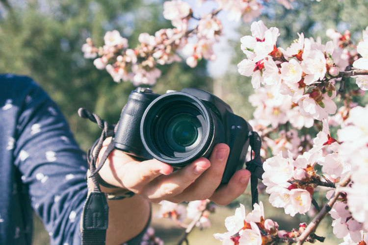 Close-up of hand holding camera by flowers
