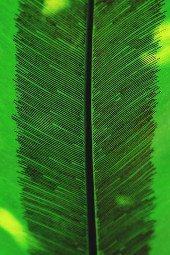 Back of fern