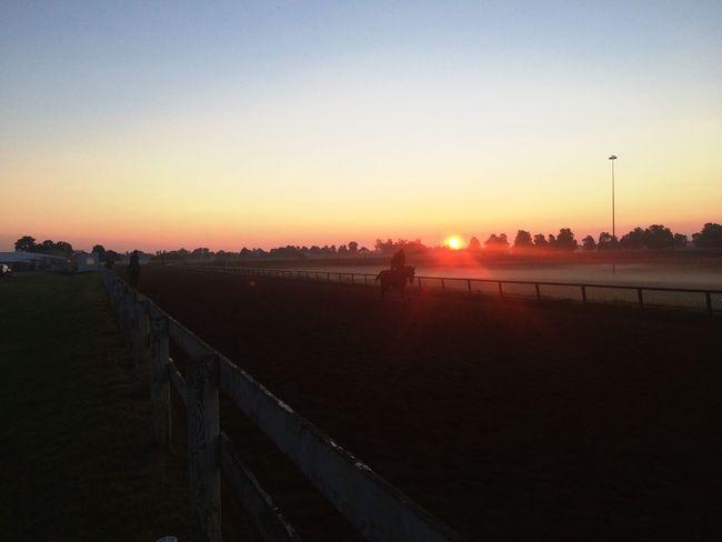 Morning workouts Horse Animal Race Racetrack Lexington Kentucky  KentuckyDerby First Eyeem Photo Thoroughbred