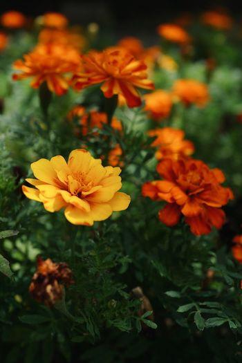 花🌼 Flowering