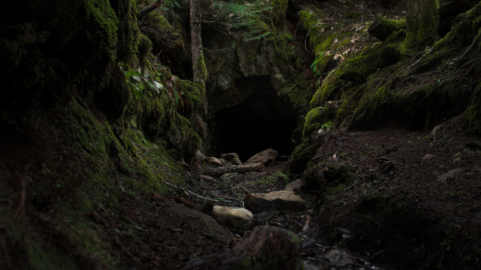 Beauty In Nature Challange Cinematic Cinematic Photography Courage Dark Dark Darkness Eco Tourism Exploring Forest Gate Horror Landscape Lifestyles Nature Night Outdoors Scary Scenics Travel Destinations Tunnel