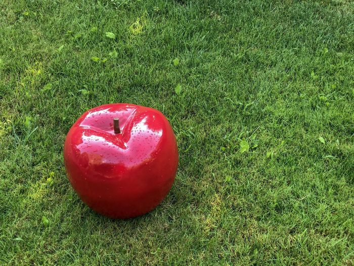 Giant Apple on the grass Red Green Color Plant Grass Food And Drink Food Land Red Green Color Plant Grass Food And Drink Food Land Apple - Fruit Healthy Eating Freshness High Angle View Fruit Field Nature Wellbeing No People Day Apple Single Object Growth