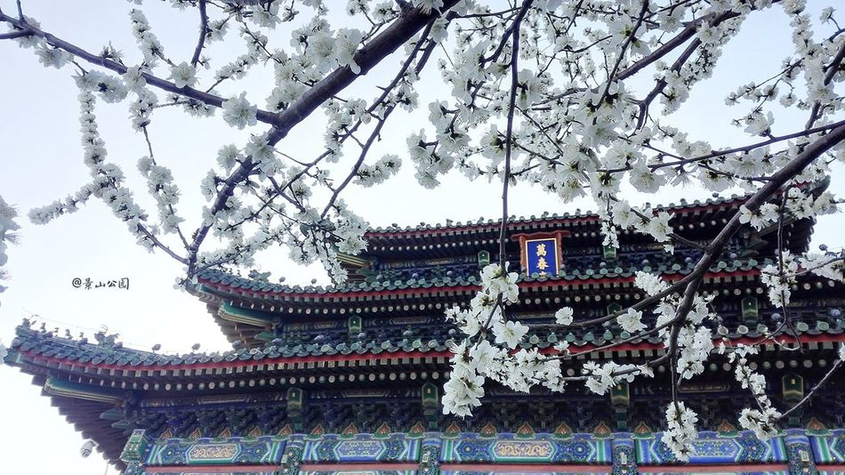 JingshanImperialPark Beijing Scenes Viejo Capital Travel Destinations Beijing, China Early Spring Flowers Springtime Tourism Old Capital City Views City EyeEm New Here EyeEmNewHere EyeEmNewHere EyeEmNewHere EyeEmNewHere PhonePhotography Phone Photography Phonegraphy Huaweiphotography Phoneonly