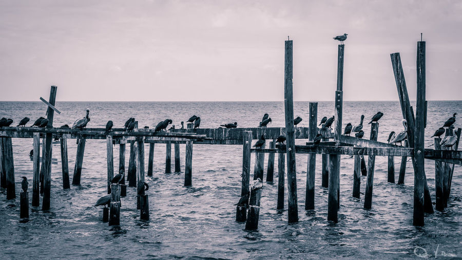 Cedar Key Day Horizon Over Water Nature No People Outdoors Sea Sky Water Wooden Post