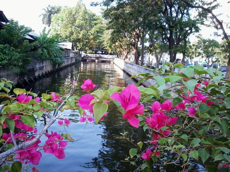 Flower &Klong San@Klongsan,Thailand, That's Me