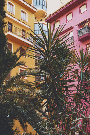 Low angle view of palm tree by building