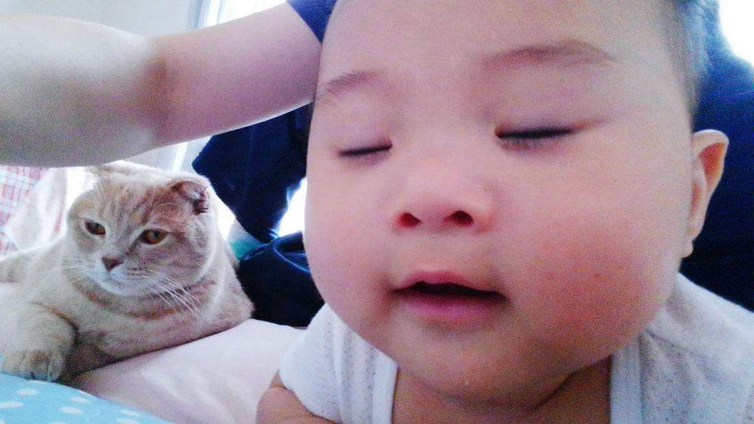 Pets Day Hello World とっちゃん アラタボーイ Baby マンガみたいな顔になってきた