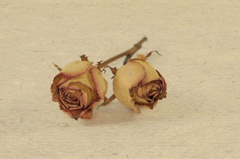 Close-Up Of Dry Roses On Table