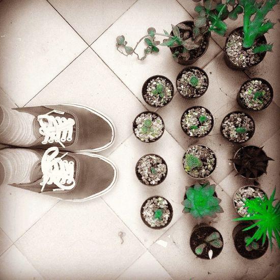 Green Favorite Cactus I Love Cactus