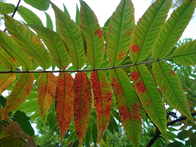 Growth Leaf Green Color No People Nature Day Low Angle View Agriculture Beauty In Nature Outdoors Tree Close-up Freshness Sky