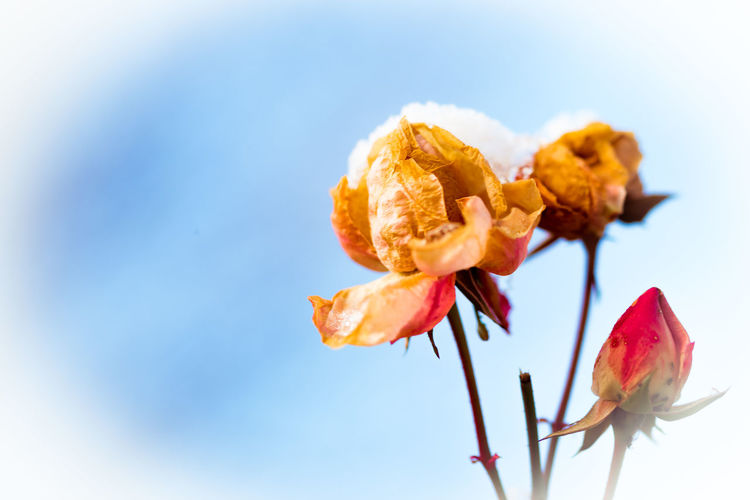 Close-up of wilted flowers against sky