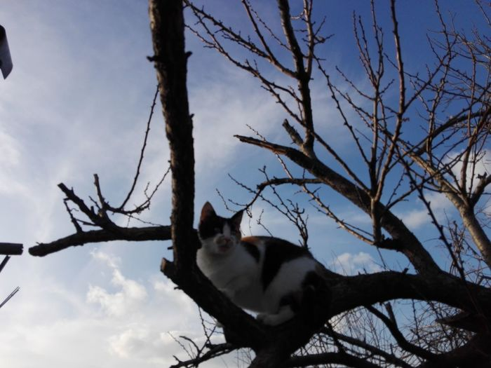 Cat On Tree WOLFZUACHiV Photography Veronica IONITA Photography Ionita Veronica Photography Eyeem Market Pufosenii WOLFZUACHiV Pets On Market Cute Cat Tree Branches And Sky Cat On Branch Cat In Tree Animal Wildlife Animals In The Wild Tree One Animal Animal Branch Mammal Outdoors Bare Tree Animal Themes Sky Nature No People Low Angle View Tree Trunk Day