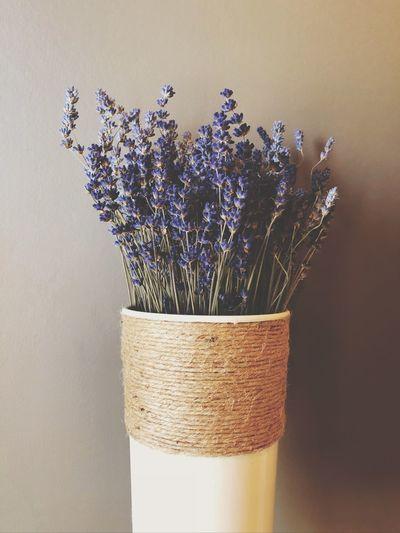 Indoors  Plant
