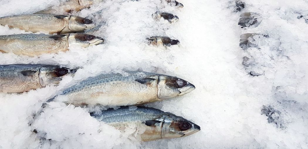 Tuna on ice for sale at market Fish Cold Temperature Seafood Ice Animal Vertebrate Freshness Wellbeing Winter Food And Drink Frozen Food Snow Healthy Eating High Angle View Raw Food For Sale Directly Above Fish Market Seafood Market Tuna Freezing