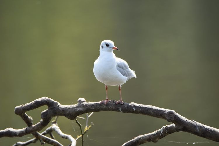 Front view of bird perching on branch
