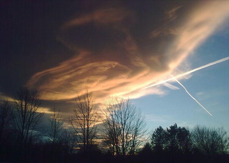 Chemtrails Cloud Trees Bäume Kontrast Contrast Herzwolke Silhouette Sky