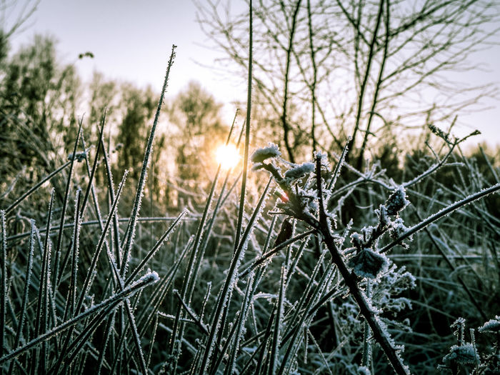 Beauty In Nature Close-up Cold Cold Temperature Day Dusk Frost Golden Hour Grass Growth Hoar Frost I Nature No People Outdoors Sky Sun Sunset Tranquility Tree