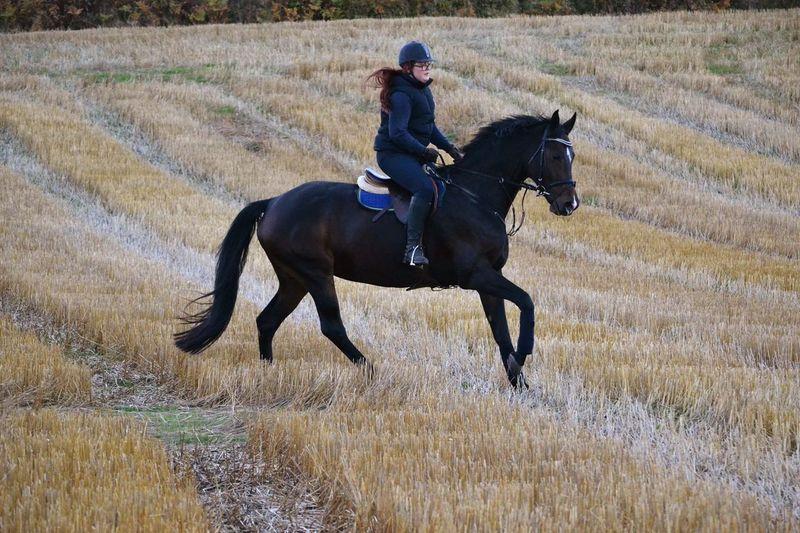 Moments like this 🙏🏼😌 Horse Flippan Passion Lifestyle Peltoralli Photography
