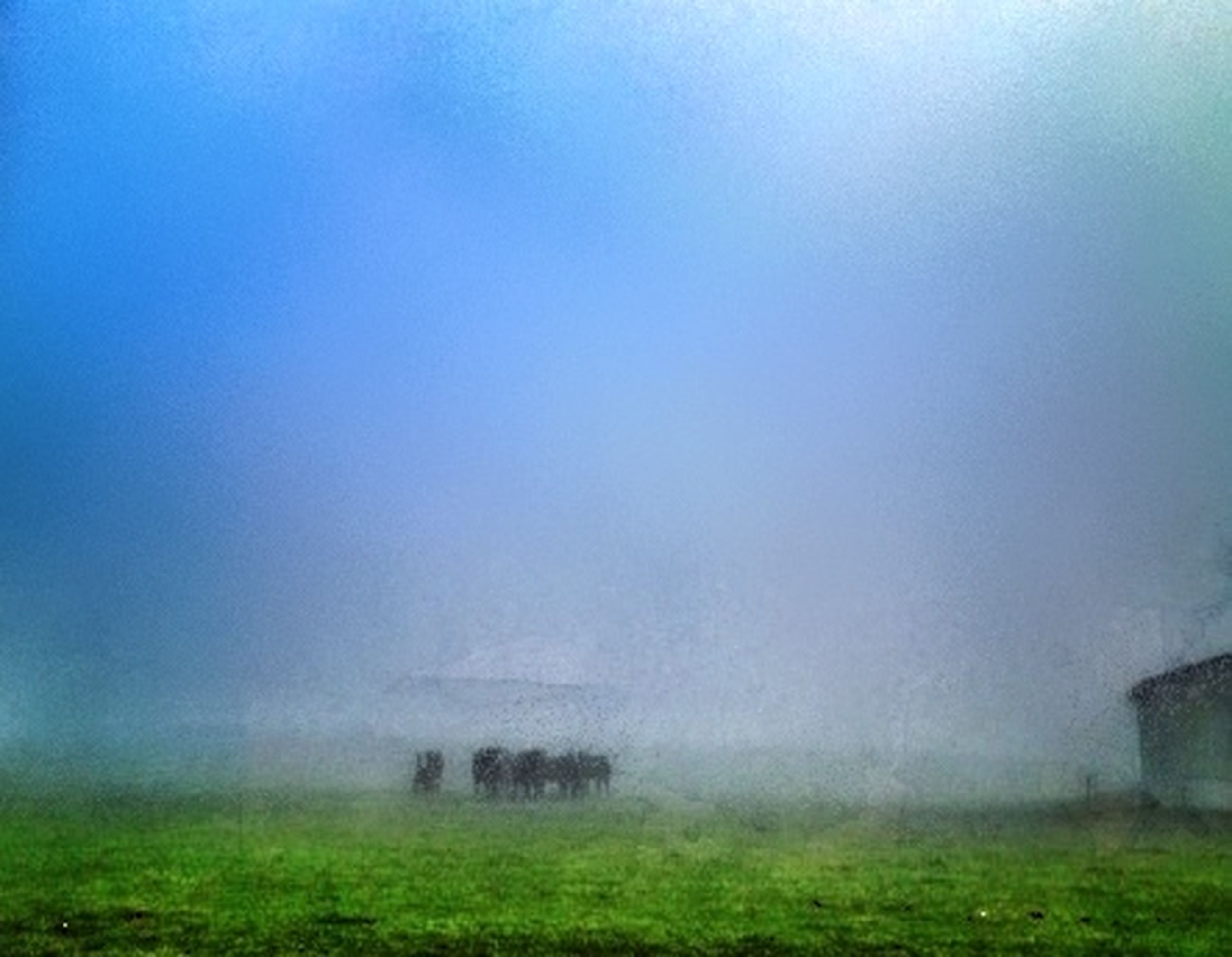 fog, foggy, weather, field, landscape, tranquil scene, tranquility, grass, beauty in nature, nature, scenics, copy space, grassy, sky, tree, growth, green color, outdoors, mist, rural scene