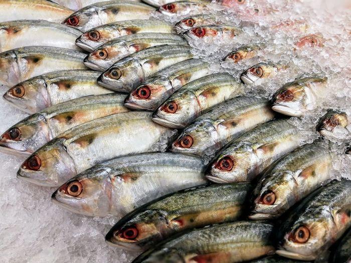 Fresh Tropical Fish Market Fish Scale Freezing Ice Tropical Fish Close-up Day Enjoying Life Fish Fish Market Food Fresh Freshness Indoors  Omega Seafood Skin