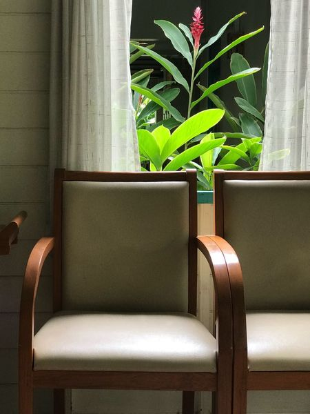 Chair Conner Plant Indoors  Green Color Growth Potted Plant No People Nature Chair Seat Day Window Furniture Armchair Leaf Plant Part Sofa