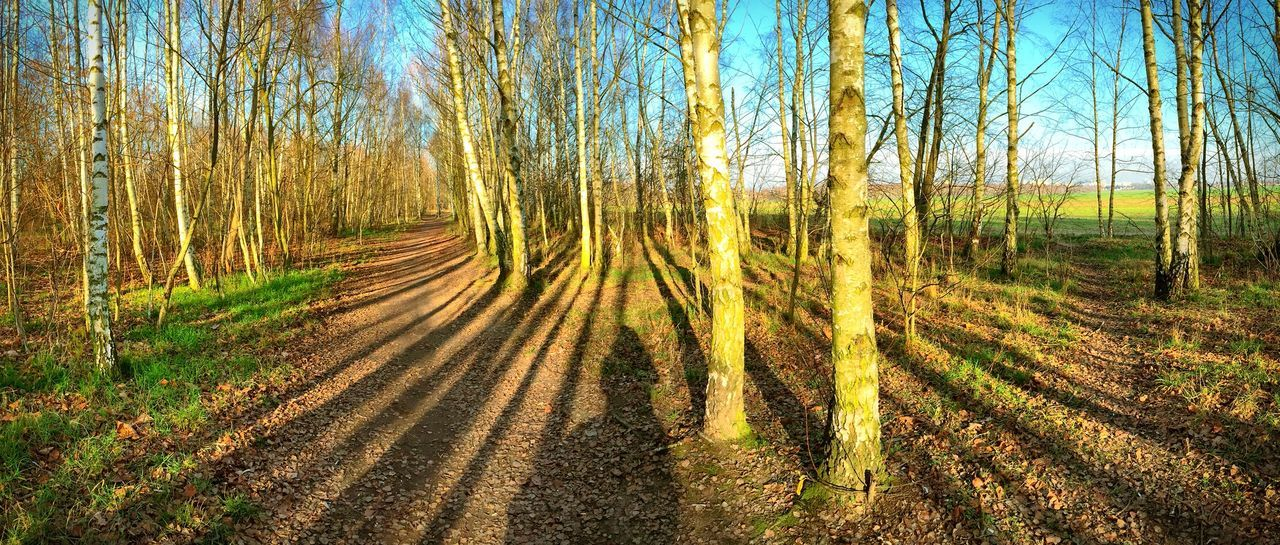 Creative Light And Shadow Birch Tree Forest Berlin