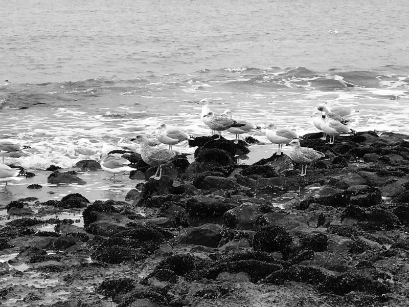 Water Sea Beach Nature Wave Shore Outdoors No People Beauty In Nature Day Birds Bird Photography Seagulls Seagull Seagulls And Sea Northsea