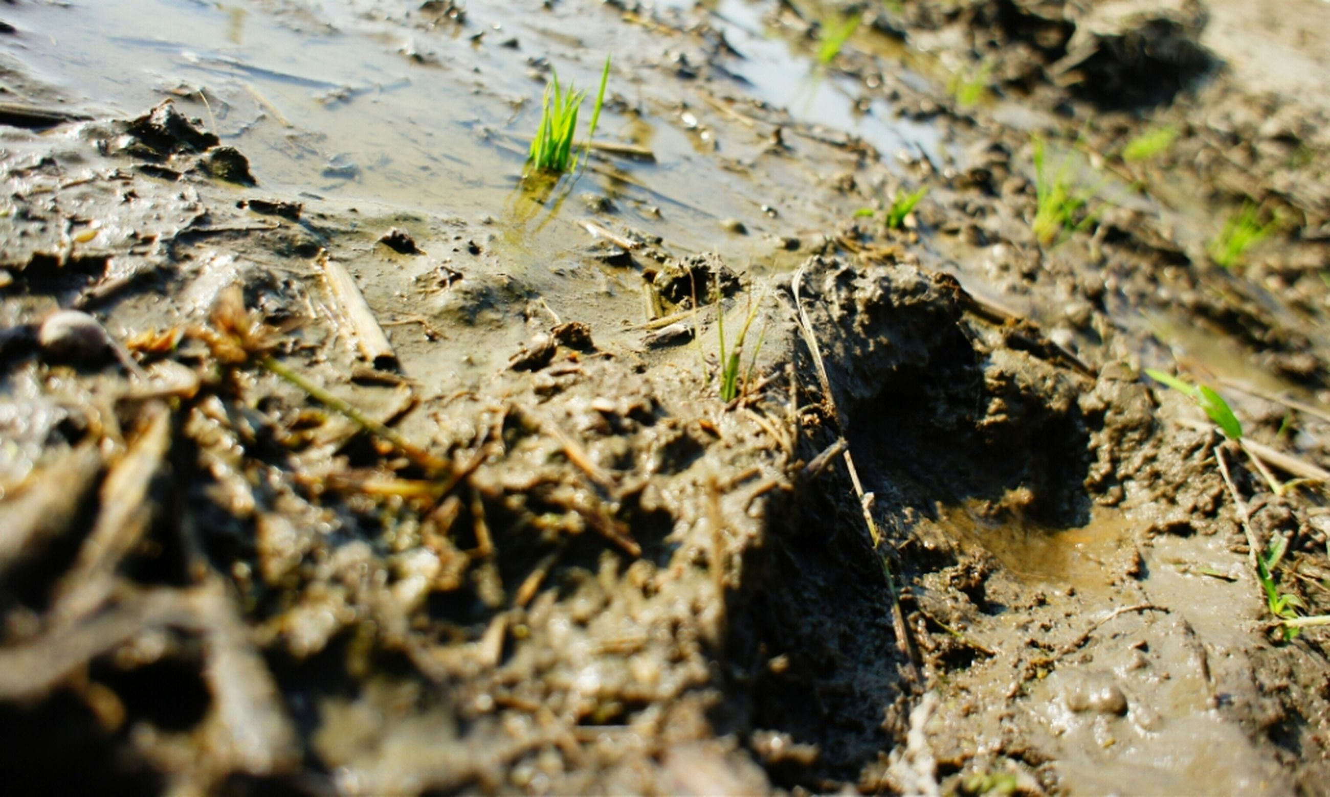 nature, selective focus, leaf, tranquility, close-up, surface level, growth, rock - object, high angle view, dry, plant, field, day, ground, outdoors, dirt, no people, sand, sunlight, stone - object