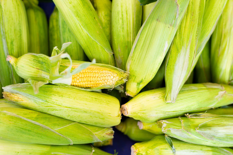Agriculture Close-up Corn Corn On The Cob Day Food Food And Drink Freshness Full Frame Green Color Healthy Eating Large Group Of Objects Market No People Organic Outdoors Raw Food Still Life Sweetcorn Vegetable Wellbeing
