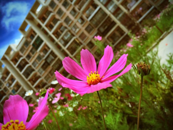 Tibet Flowers Tibet