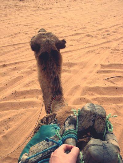 Ride On The Back Me And Camel Camel On Camels Back Adventure Ride Or Die Sand Sahara Sahara Desert Deserts Around The World Desert Beauty