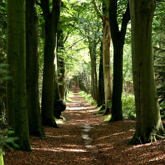 Tree Alley Forest Naturelovers Nature