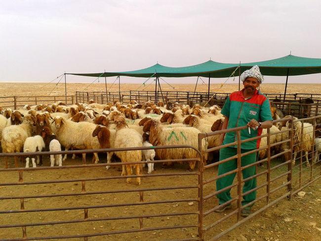 Bangladeshi Desert Desert Life Documentary Photography Eyeemawards2016 Eyeemgallery Sheeps The Great Outdoors - 2016 EyeEm Awards The Photojournalist - 2016 EyeEm Awards Watcher
