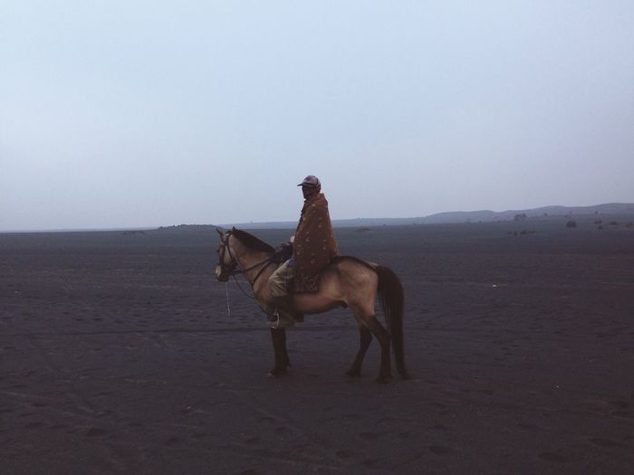 Side view of horse standing on sand at desert against clear sky