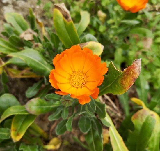 Flowering Plant Flower Plant Beauty In Nature Freshness Fragility Petal Vulnerability  Flower Head