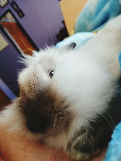 Buenos dias, dia. ❤ BAAM! Bunny  Bunny Love Taking Photos Relaxing My Rabbit Juebebes