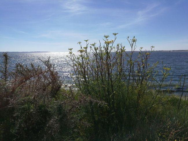 Atlantic Ocean Graves Bretagne France Landscape Nature Summer ☀ Beach Holiday No People Carte Postale