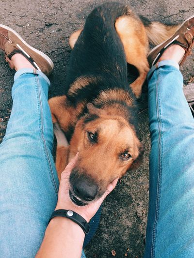 Sabah Borneo Dog Pets Domestic Animals Animal Themes Real People One Person Mammal One Animal Lifestyles Pet Owner High Angle View Bonding Human Body Part Low Section Friendship Human Leg Outdoors Day Human Hand German Shepherd Malaysia