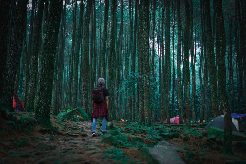 Rear view of a man standing in forest