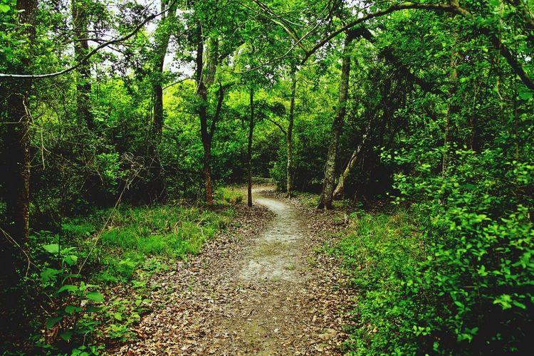 Winding Path Nature Path Nature Naturescapes