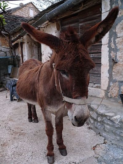 Domestic Animals Donkey Philosopher Melancholia EyeEm Gallery Eye4photography
