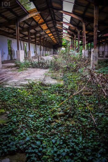 Abandoned Nature Lost Places Factory