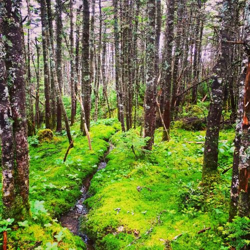 Newhampsire Getoutdoors WhiteMountains NH USA IPS2015Color Breathing Space