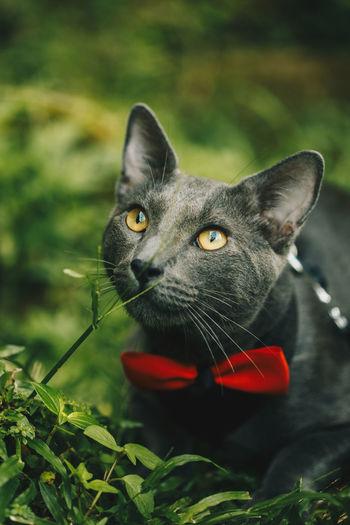 Close-up of cat amidst plants