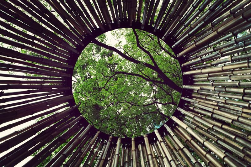 Squared Circle Bamboo Architecture Urban Nature